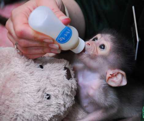 New Zealand Monkeys For Sale classifieds  Buy and Sell, Browse or